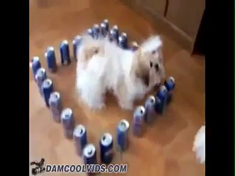 Funny cats, funny dogs, funny animals 2014
